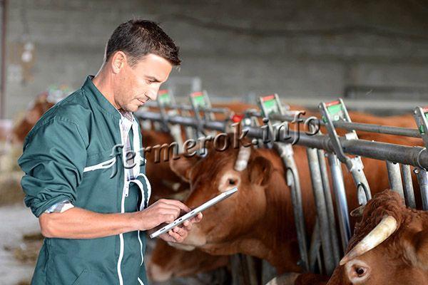 Наиболее популярное скотоводство – стойловое