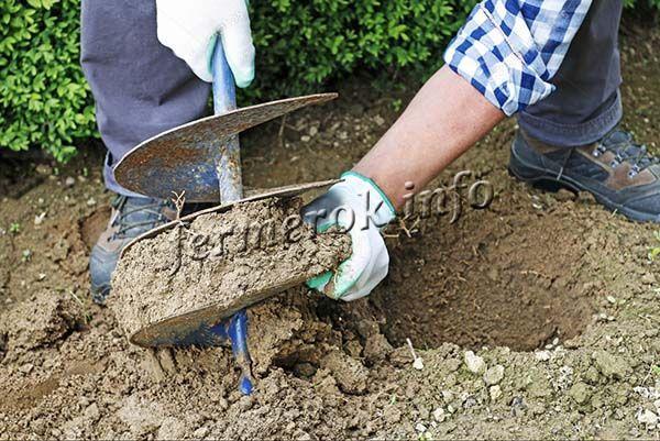 Подготовка посадочной ямы начинается за месяц или хотя бы за 2 недели до пересадки