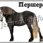 Порода лошадей Першерон