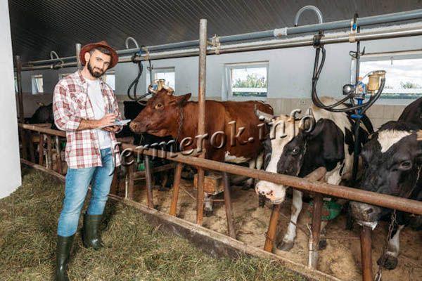 Скотоводство – это отрасль животноводства, которая специализируется на разведении крупного рогатого скота