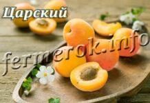 Сорт абрикоса Царский
