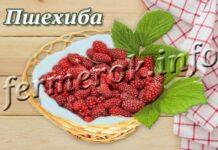 Сорт малины Пшехиба