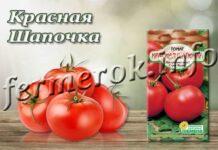 Сорт томатов Красная Шапочка