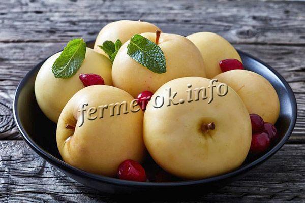 В моченом виде яблоки Богатырь получаются превосходные и отличаются отменным вкусом