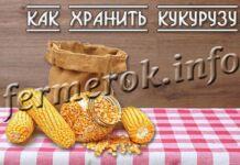 Как хранить кукурузу