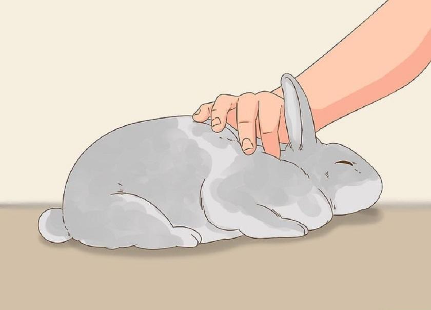 Пальпация крольчихи