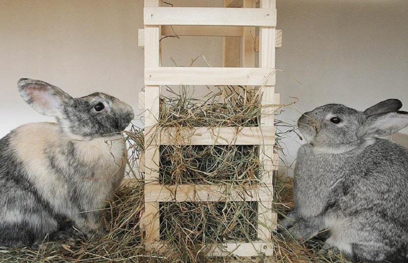 Беременные крольчихи едят солому