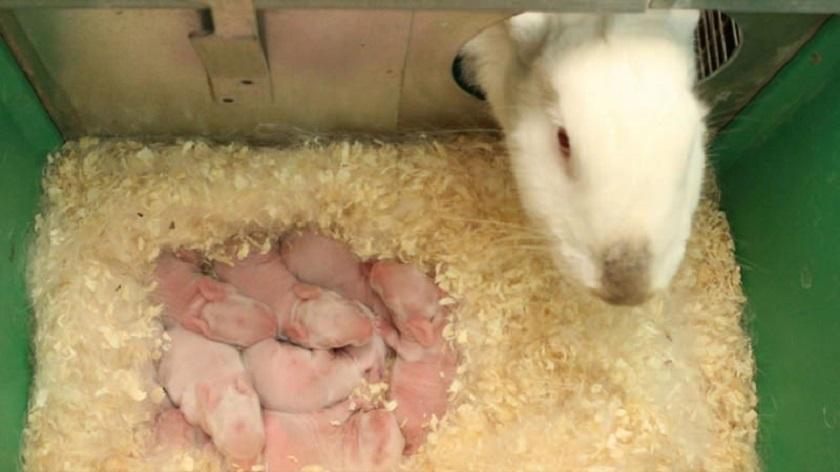 Количество рожденных крольчат