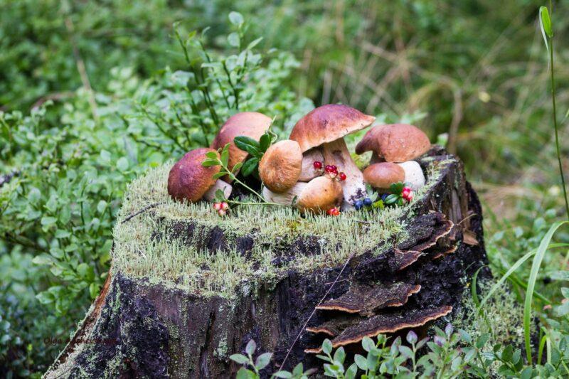 Какие съедобные грибы можно собирать в Подмосковье