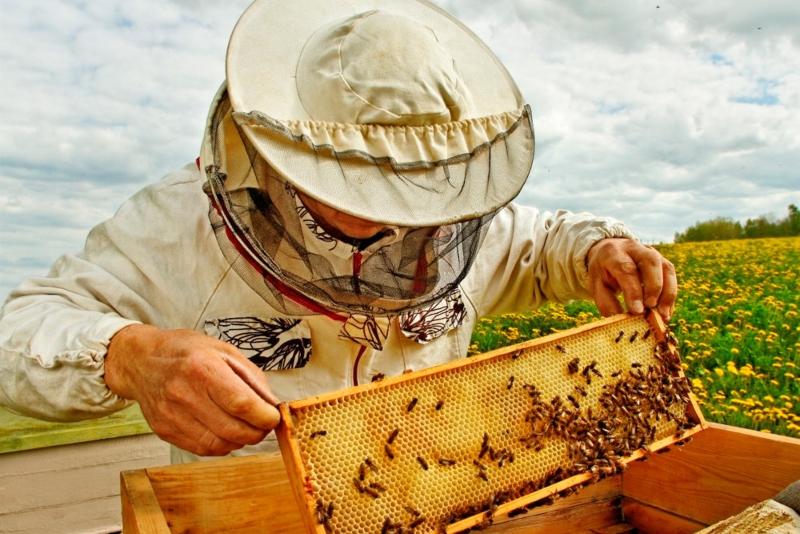 Правила и нормативы по содержанию пчел на приусадебном участке