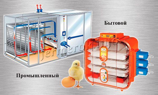 Автоматический инкубатор для яиц бывает промышленным и бытовым