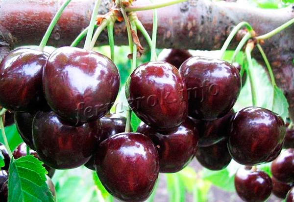 Деформированные ягоды практически не встречаются