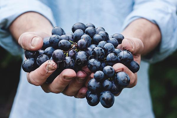 Достоинства синих сортов прежде всего в их вкусовых и полезных качествах