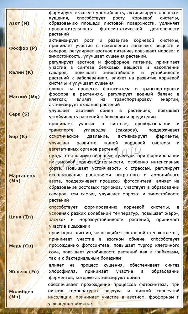 Физиологическая роль элементов питания для озимой пшеницы