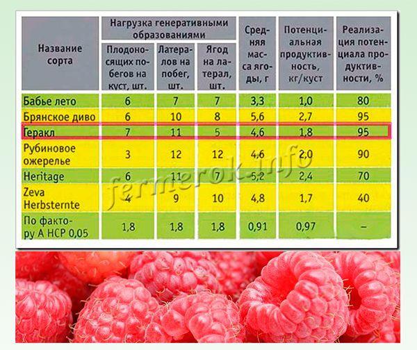 Характеристики сортов ремонтантной малины