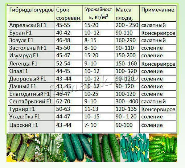 Характеристики тепличных сортов