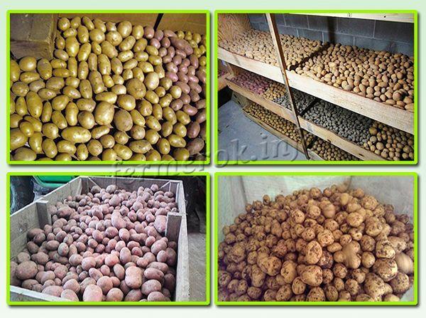 Хранение картофеля россыпью