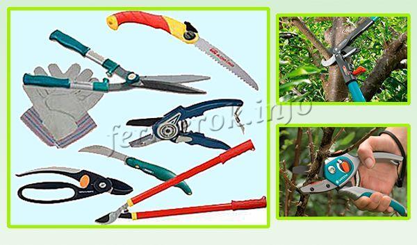 Инструменты для обрезки абрикоса