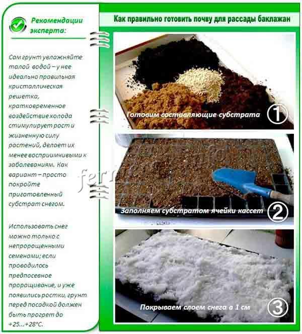 Как подготовить почву для выращивания рассады баклажан