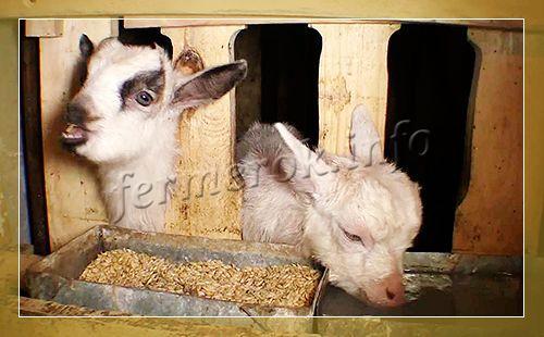 Как сделать кормушку для козы своими руками схема68
