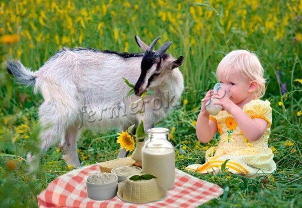 Как употреблять и хранить козье молоко