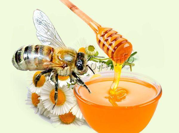 Карпатские пчелы отличаются высокой производительностью меда и воска