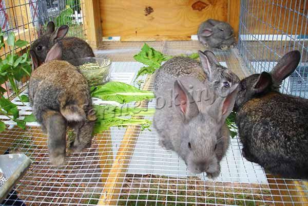 Клетки для разведения кроликов