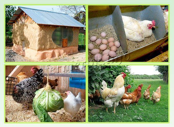 Комфортное содержание - залог повышения яйценоскости