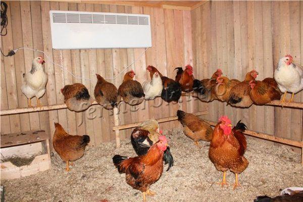 Курятник для Кучинской юбилейной породы кур