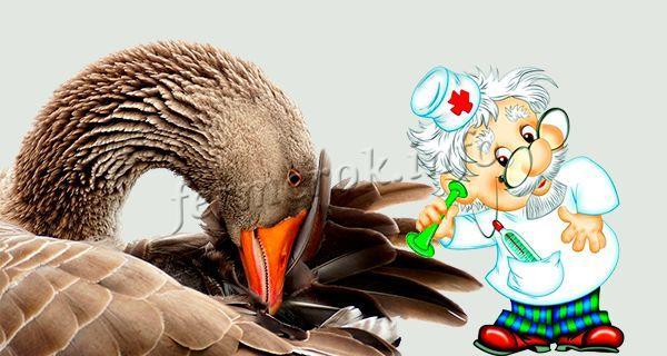 Лечение болезней обычно назначает ветеринар
