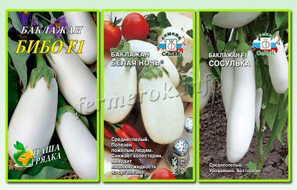 Лучшие белые сорта баклажанов для теплиц