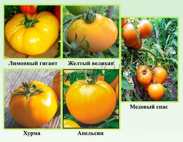 Лучшие сорта крупных желтых томатов