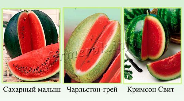 Сорта арбуза ранние годные для севера