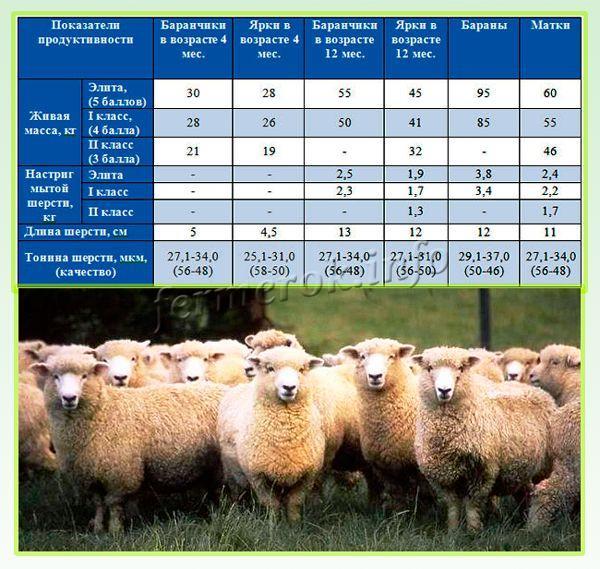 Минимальные показатели продуктивности Куйбышевской породы овец