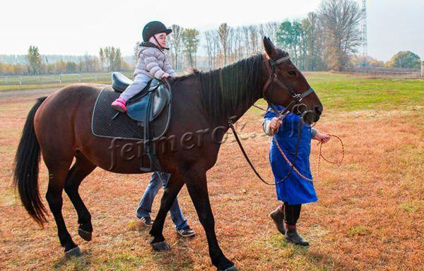 Как зарабатывать на лошадях зарабатывай деньги на бирже