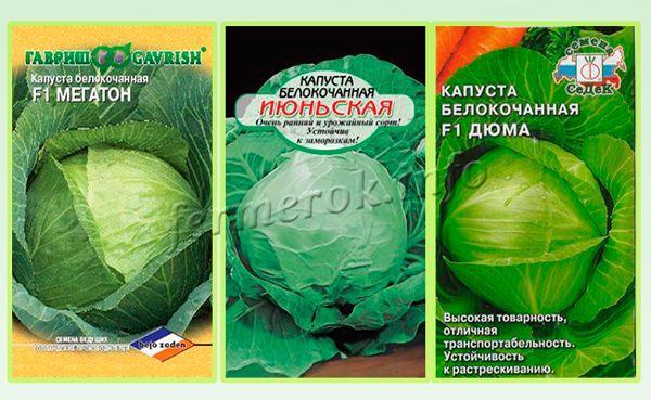 Наиболее востребованные сорта белокочанной капусты