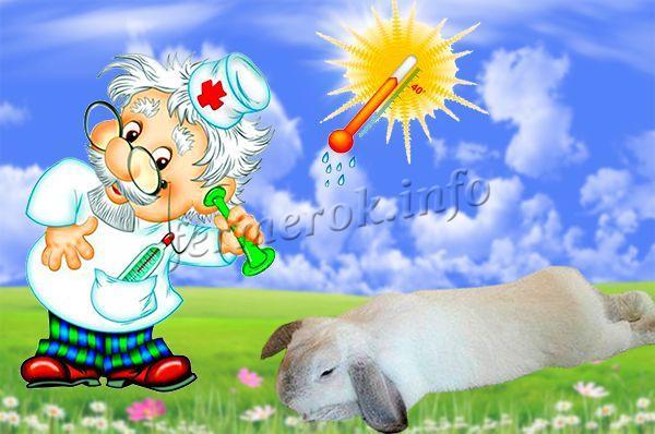 Незаразные болезни кроликов. Солнечный удар
