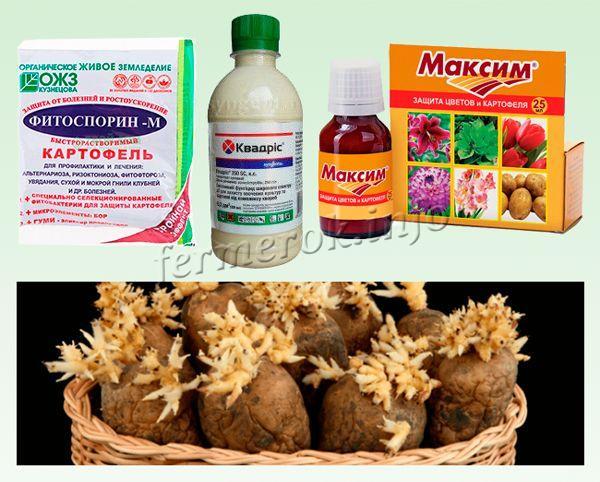 Обеззараживание от грибковых и бактериальных заболеваний