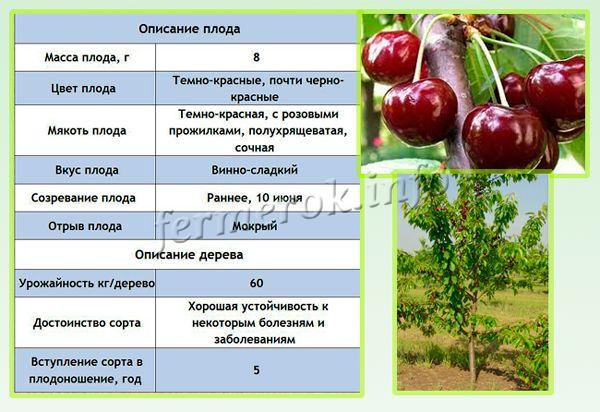 Описание черешни сорта Валерий Чкалов