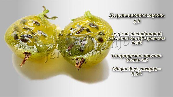 Описание сорта Русский желтый