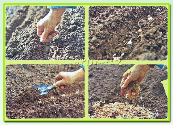 Осенняя посадка лука-севка имеет много положительных сторон