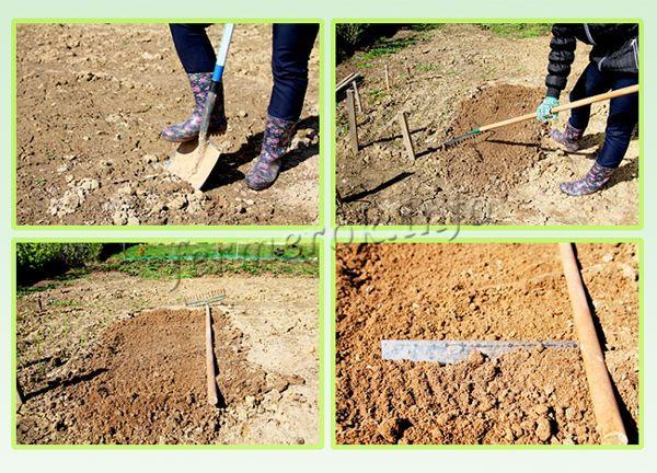 Подготовка почвы к посадке укропа