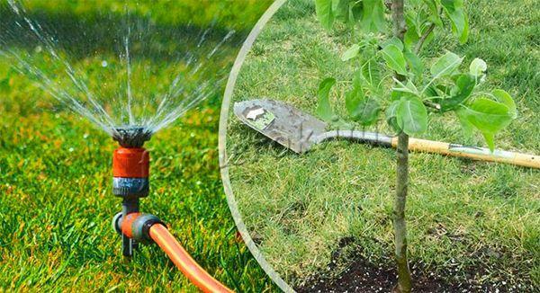 Поливы проводят на протяжении всего теплого сезона