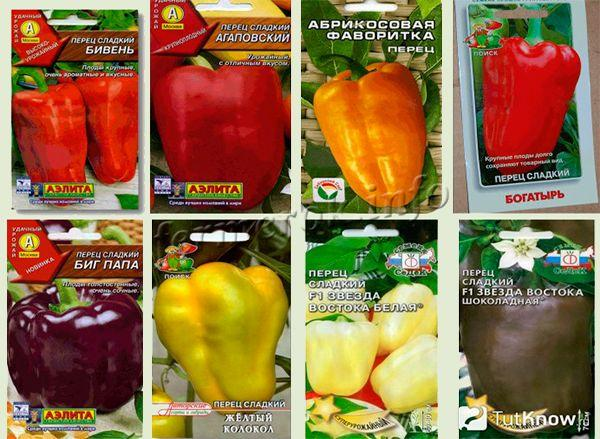 Популярные сорта перца