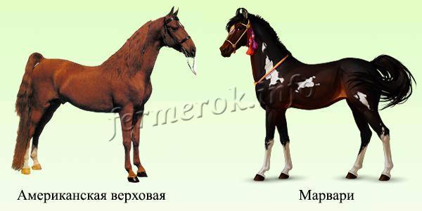 Породы верховых лошадей 1