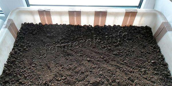 Посадка капусты на рассаду осуществляется исключительно в легкую землю