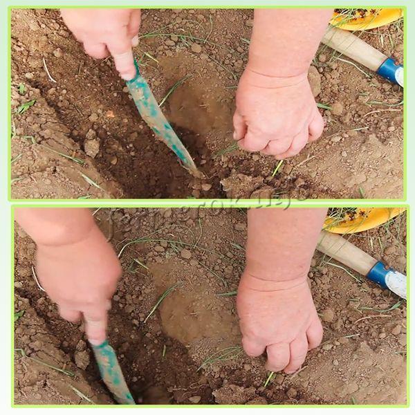 Посадки лука-порея из улитки в открытый грунт