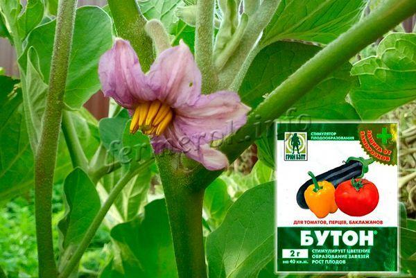 При появлении первых цветков важно обработать растение стимулятором роста