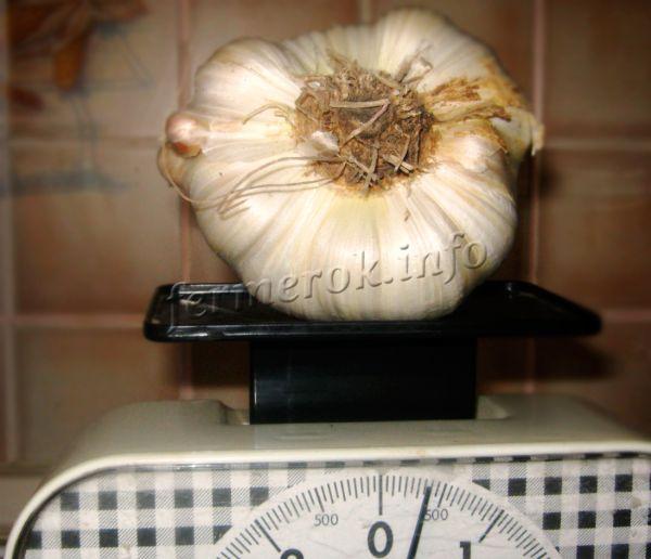 При посадке однолетней луковички можно получить чеснок весом 400-600 грамм!