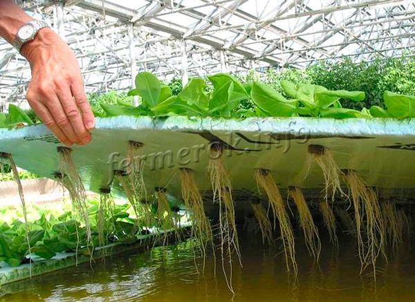 Простая технология выращивания привычных для всех видов зелени позволяет производить ее в больших объемах